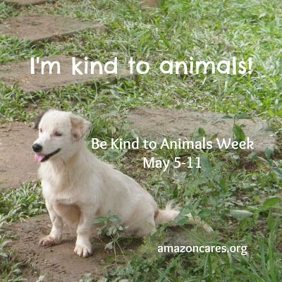 Be Kind To Animals Week Part 2 7 No Kill Dog Shelter Kindness To Animals Animals Animal Charities