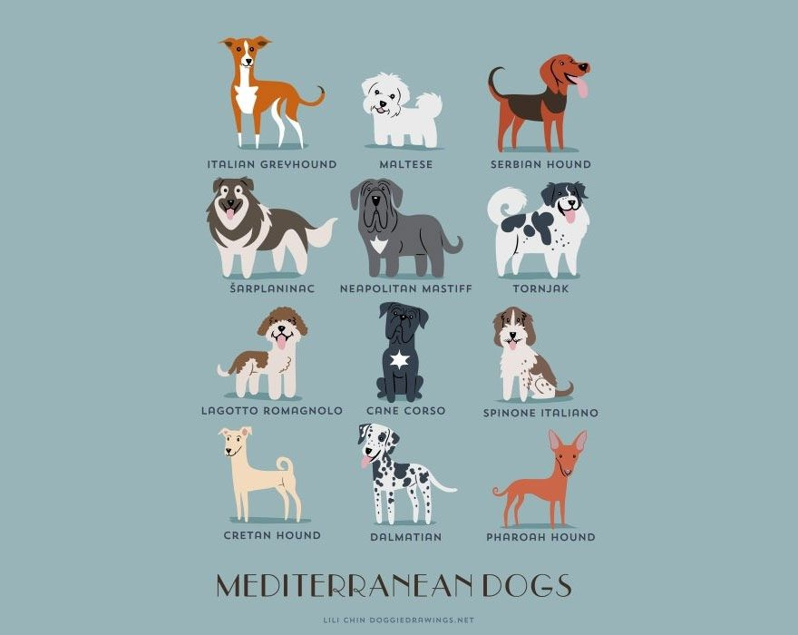Travel The World Of Doggos With These Adorably Illustrated Infographics With Images Dogs Dog Drawing Dog Breeds