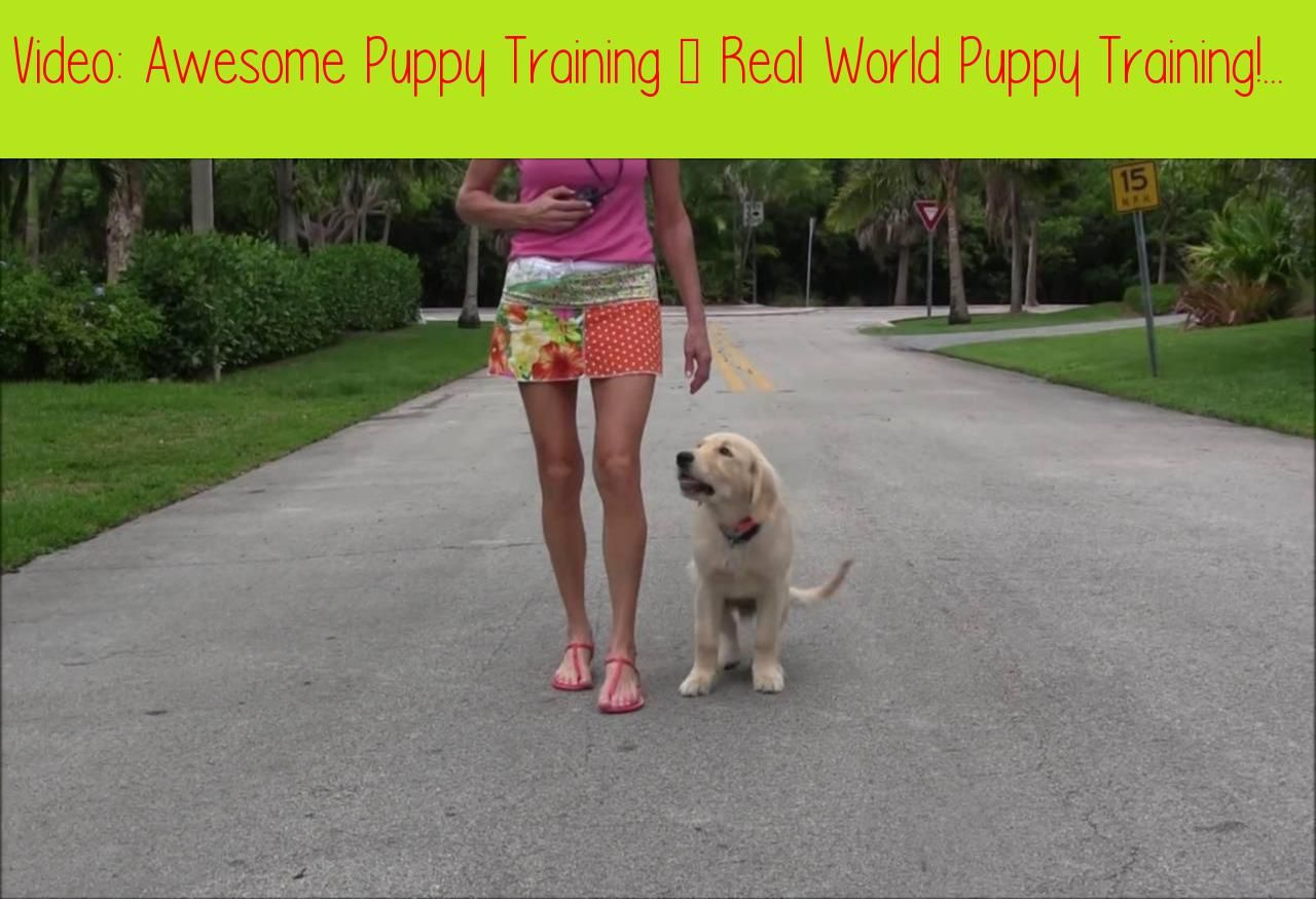 Awesome Puppy Training Real World Puppy Training When You Want