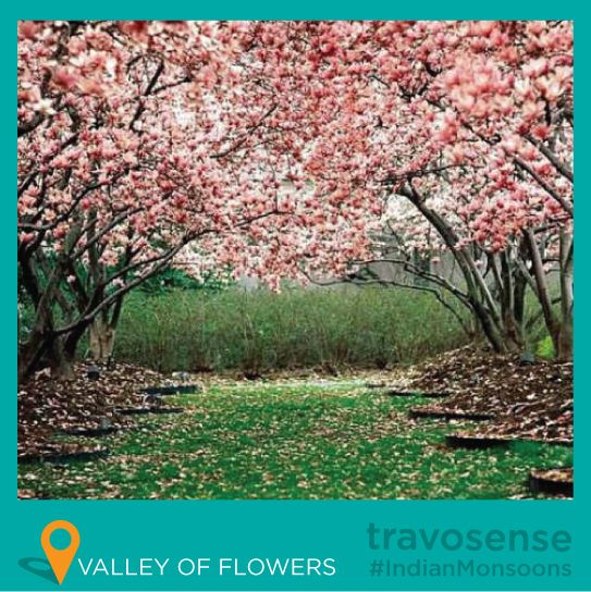Travosense Presents Indianmonsoons 3 The Valley Of Flowers The Stunning Landscape Of The Valle Cherry Blossom Wallpaper Blossom Trees Spring Wallpaper