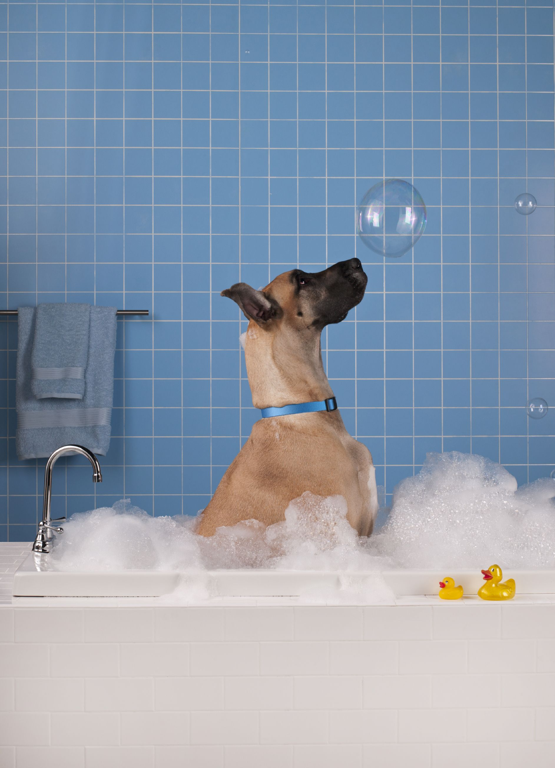 Wet Dog Wednesday Half Price Baths For Daycare Campers Http Www