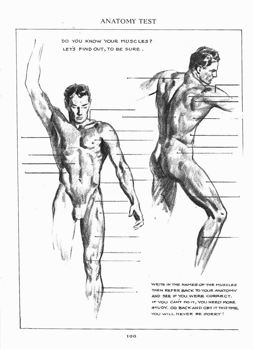 Pin von Joe auf Andrew Loomis | Pinterest | Anatomie