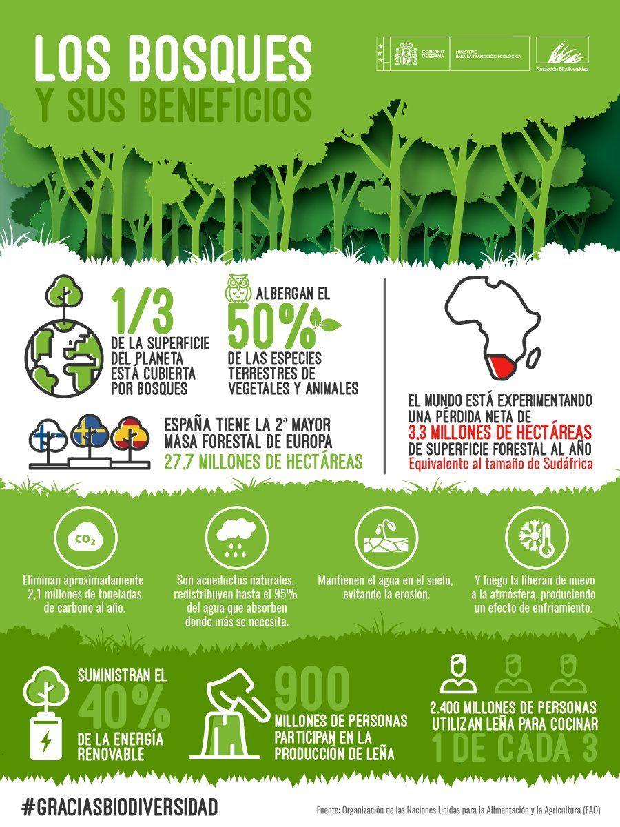 Los Bosques Y Sus Beneficios Fundacion Biodiversidad