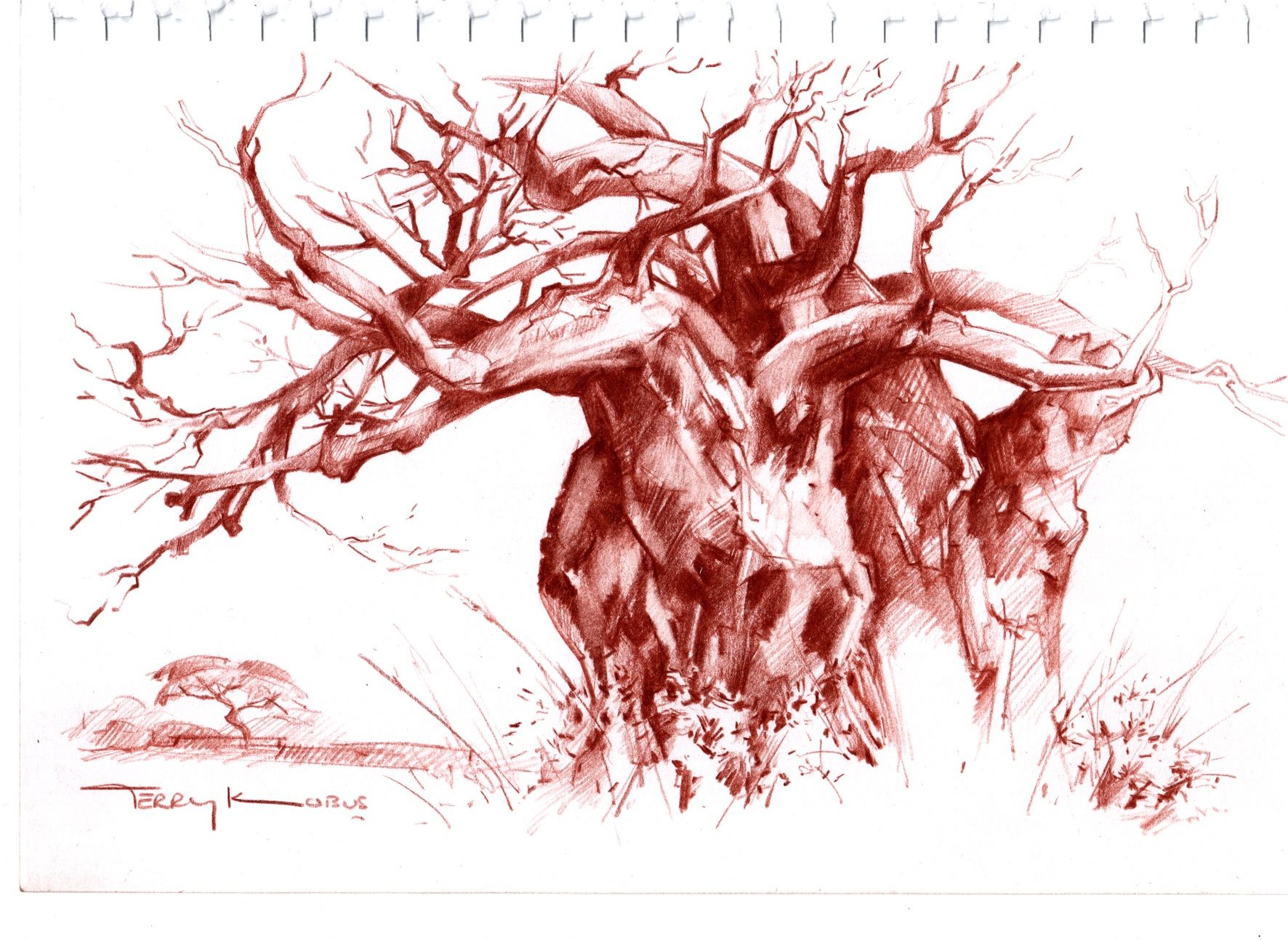 terry kobus baobab tree sepia pencil tree drawing on paper drawings from my sketchbook. Black Bedroom Furniture Sets. Home Design Ideas