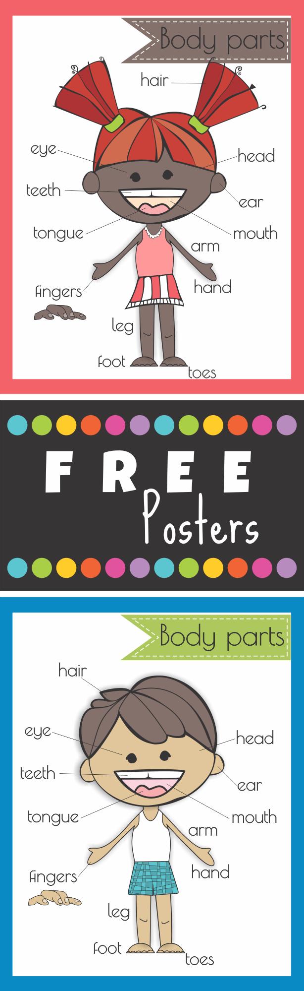 Free Body Parts Poster | Bulletin Board Ideas | Pinterest ...
