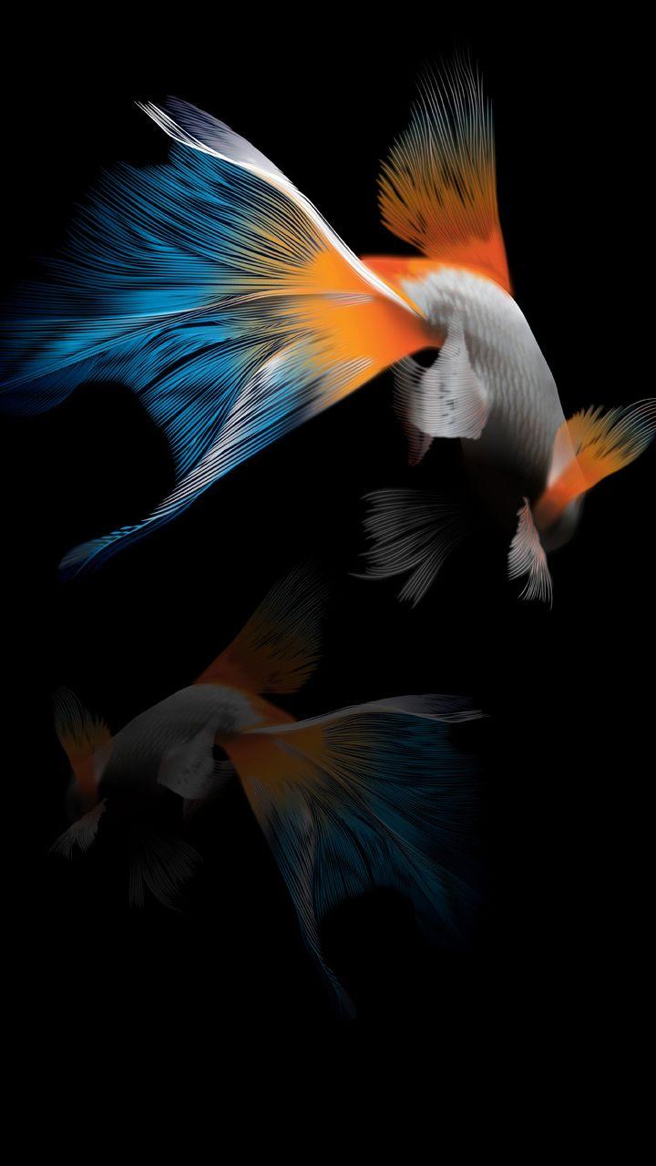 720x1280 Fish Wallpaper Fish Wallpaper Iphone Space Phone Wallpaper