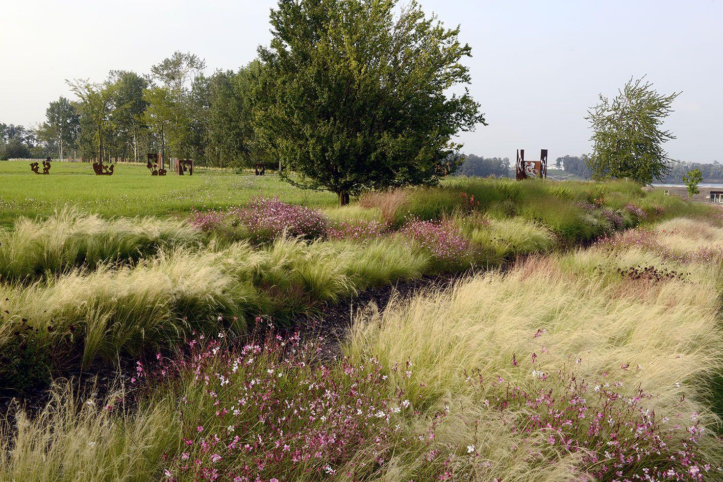 Pin von henrike wehberg krafft auf gr ser blumen for Pflanzengestaltung garten