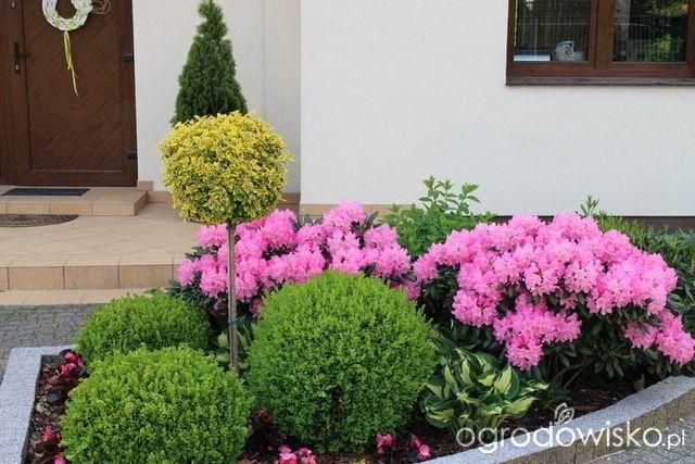 Forum Ogrodnicze Front Garden Landscape Backyard Landscaping Landscape Design