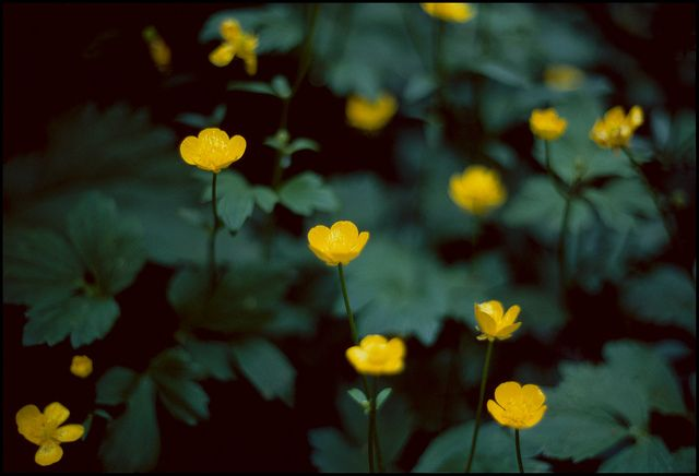 yellow by Wilf Moss, via Flickr