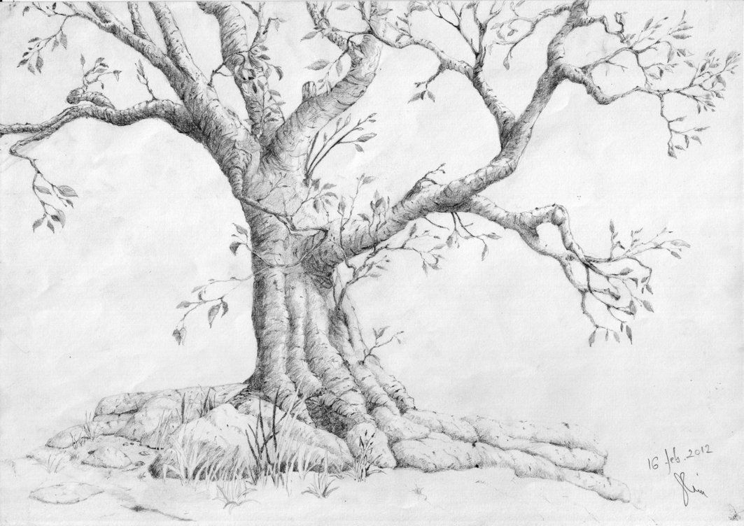 Pencil drawing of a tree 1000 images about how to draw realistic trees plants bushes