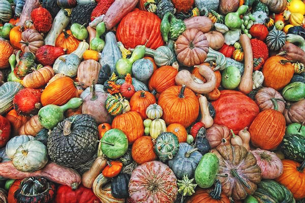 fall colors gourds and pumpkins by kevin moore - Fall Pumpkins
