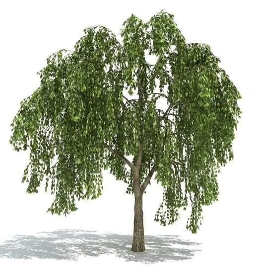 25 WillowTree 1 528x549 Free GrowFX Plants Library | plant | Plants