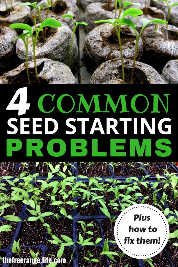 Most Common Seed Starting Problems And How To Fix Them 640 x 480