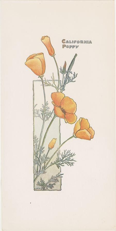 california poppy botanical illustration botanical pinterest california poppy botanical. Black Bedroom Furniture Sets. Home Design Ideas