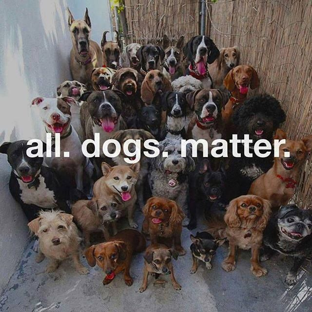 Animal Lives Matter Quickmeme