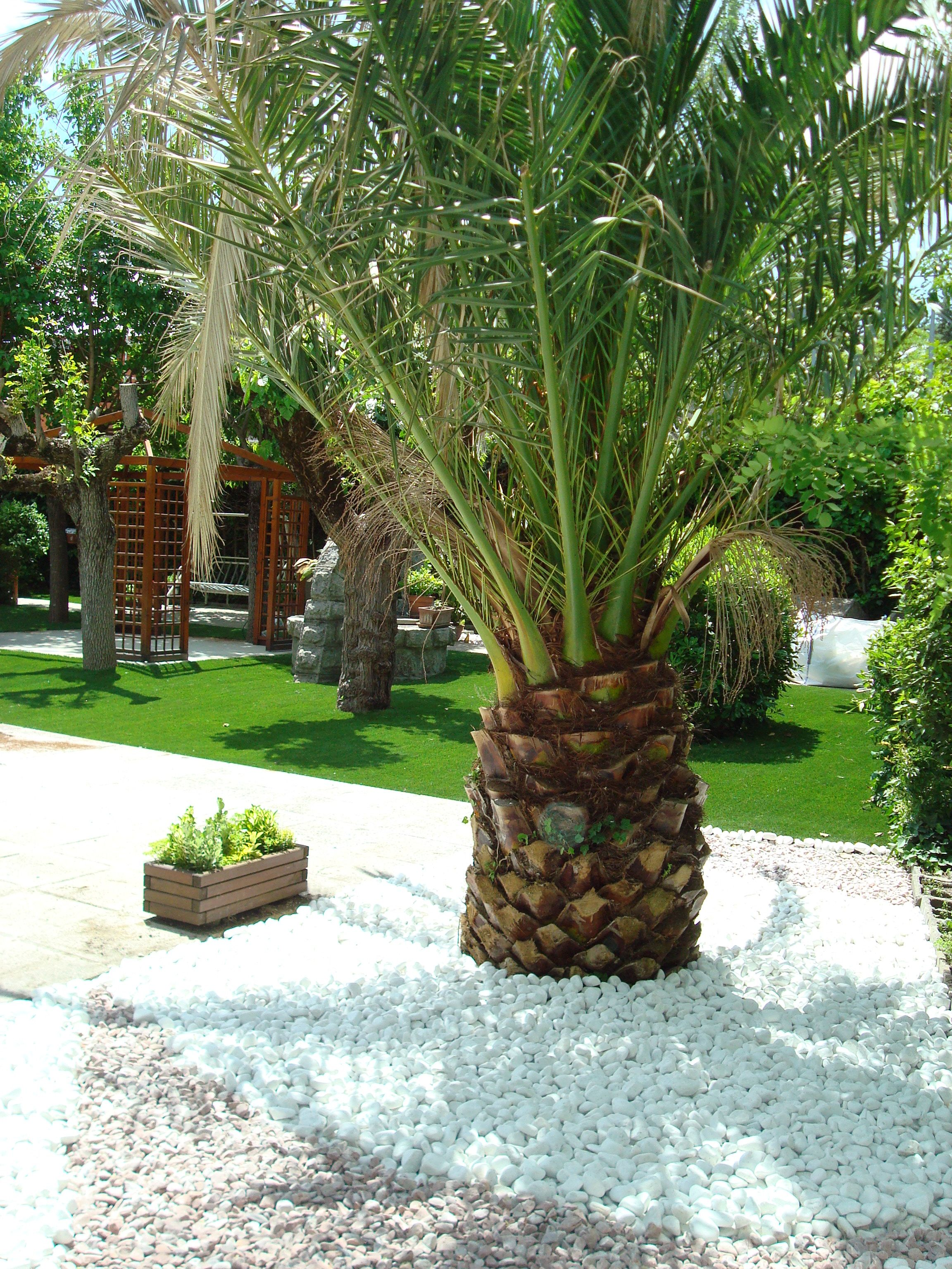 jardin con cesped artificial piedra decorativa alrededor de palmera - Piedra Decorativa Jardin