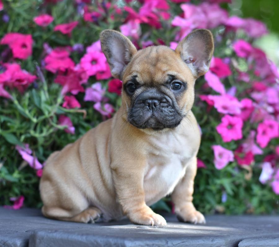 Cute Beautiful Adorable Wrinkly Oneofakindfind