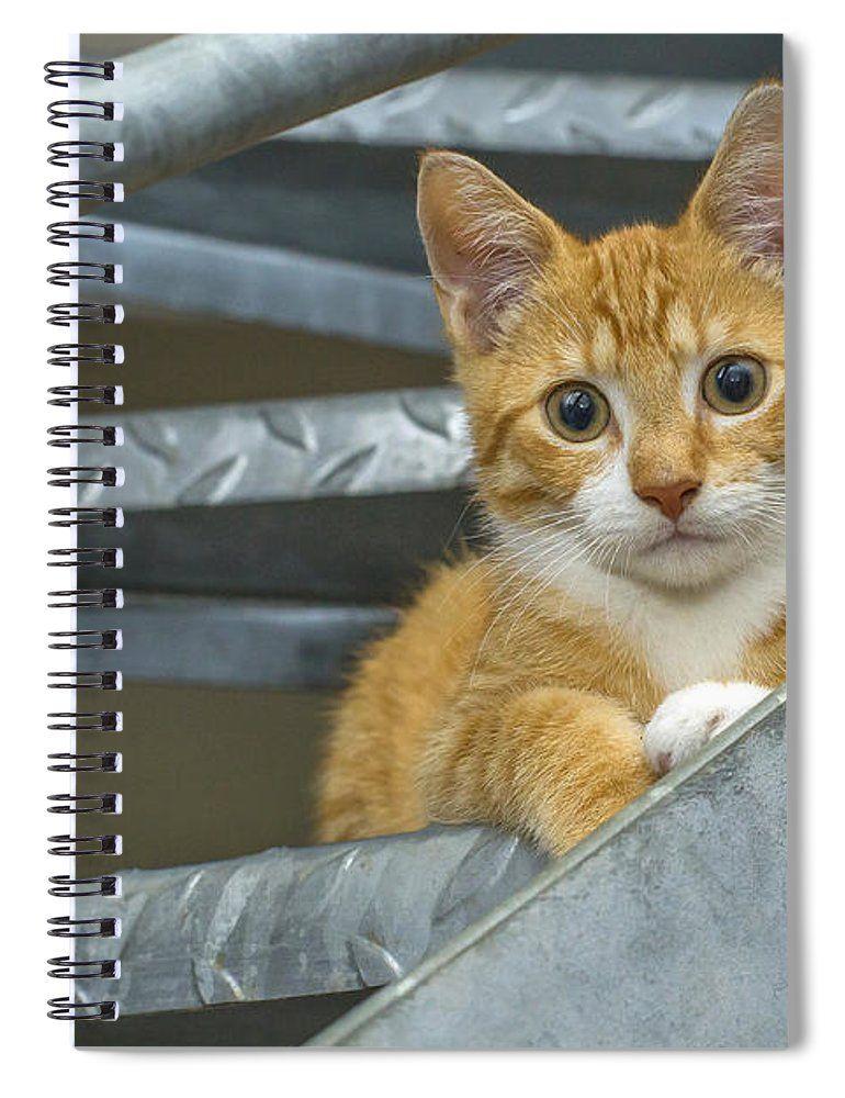 Cute Ginger Kitten Spiral Notebook for Sale by Patricia Hofmeester #gingerkitten