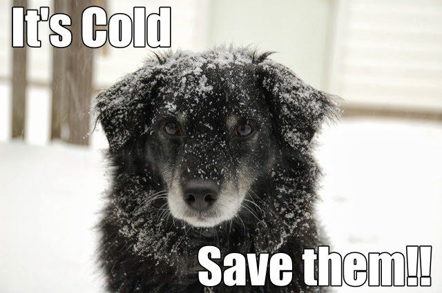 Know @ http://www.happybays.ca/blog/save-your-dog-from-hypothermia-and-frostbite-this-winter/ in details about #few #ways in which you can #prevent your #dog from #hypothermia and #frostbite this #winter.