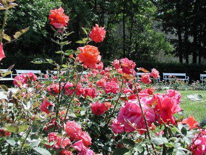 Plantas para la zonas más difíciles del jardín