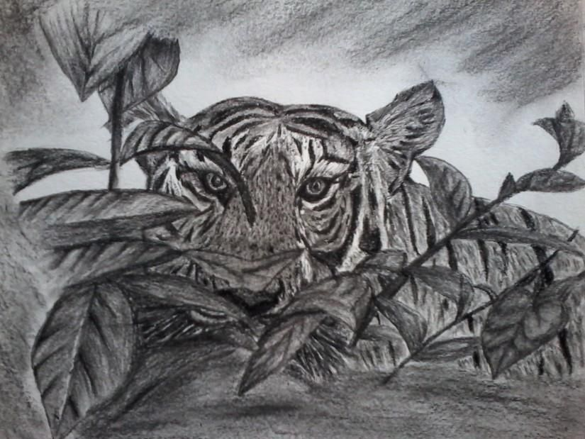 Tiger Tiger - Sketching by Anannya Sen at touchtalent 78894