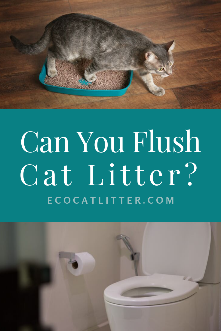 Can you really flush cat litter? To flush or not to flush
