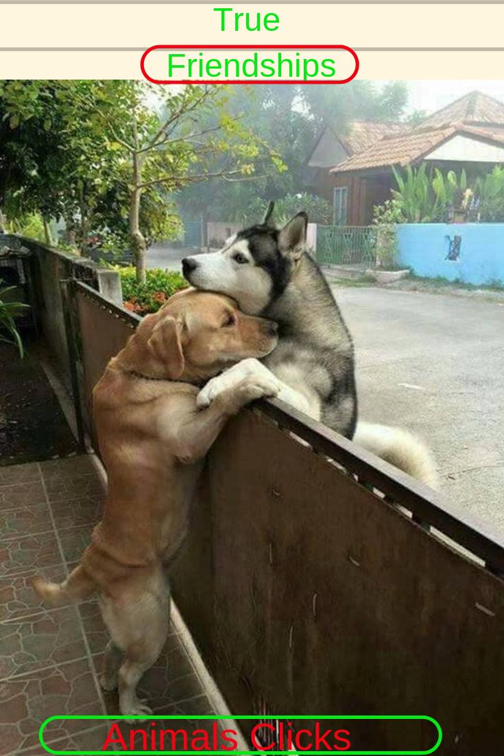 True Friendship Animals Clicks Pinterest Pets Dogs and Animals