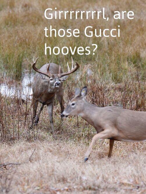 Gucci hooves