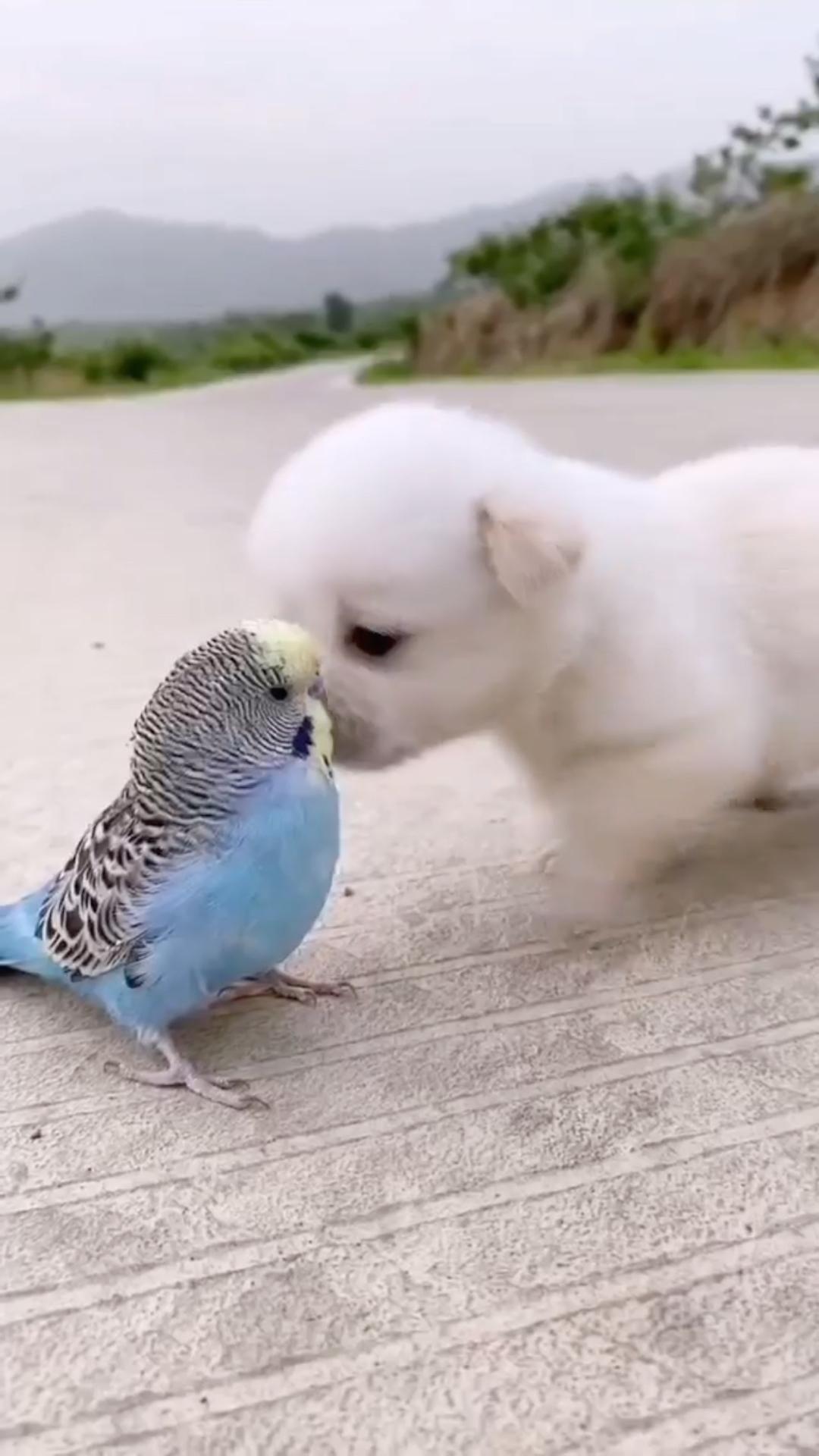 MOMENTO FOFURA 😍😍😍😍 #FRIENDS #DOG #BIRD #pinterest