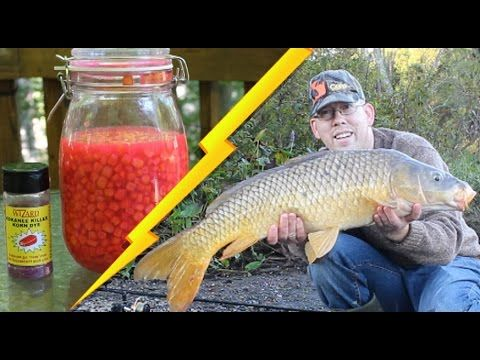 dfb0d39ed23 How to Catch Carp - Best Bait Recipe  Cured Corn - YouTube