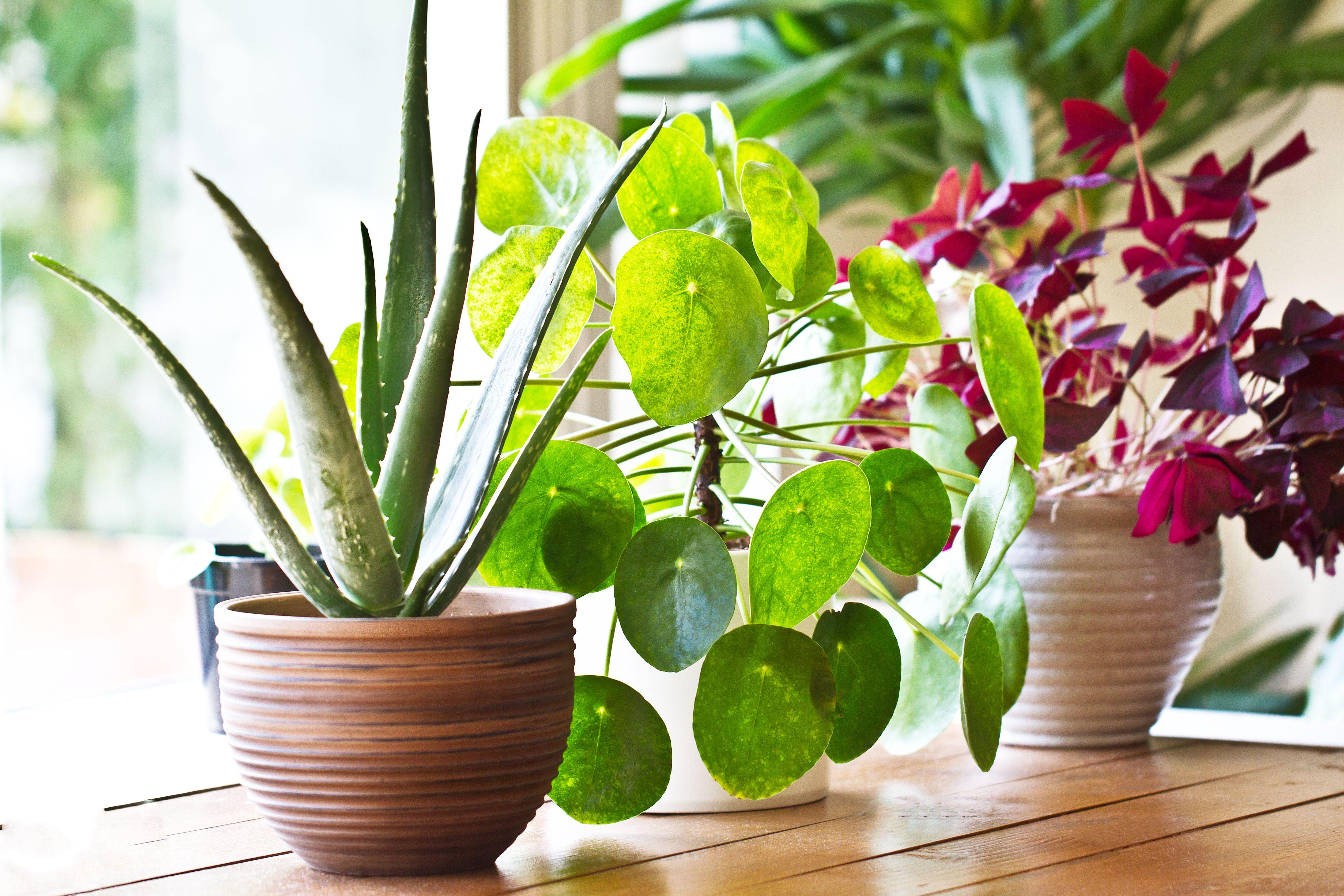 Gli errori più comuni nella cura delle piante da interno ...