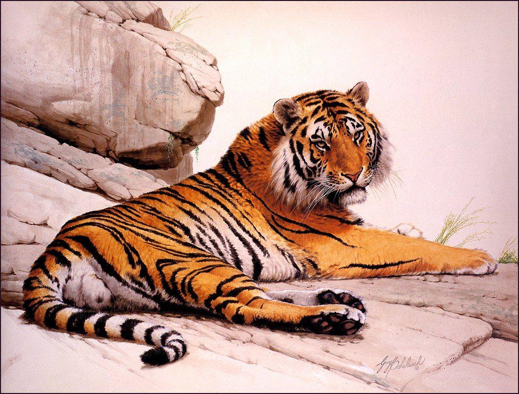 Тигр рисованная картинка