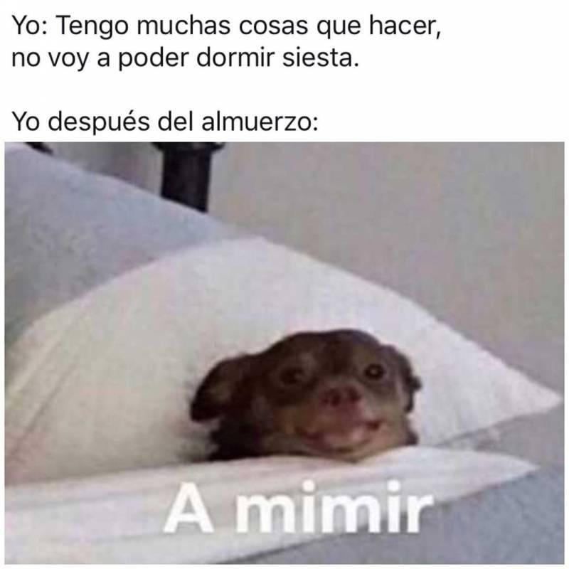 Pin De Arianasaa En Memes Dormir Siesta Dormido