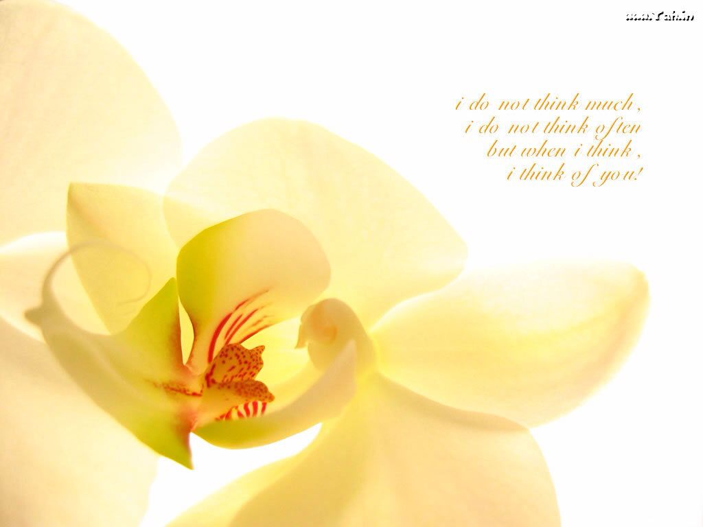 Orchid with verse flowers pinterest verses orchid and flowers
