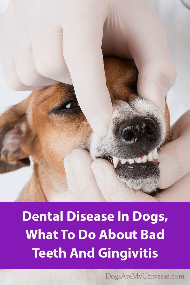 Dogs dental problems dog teeth care dental bad teeth