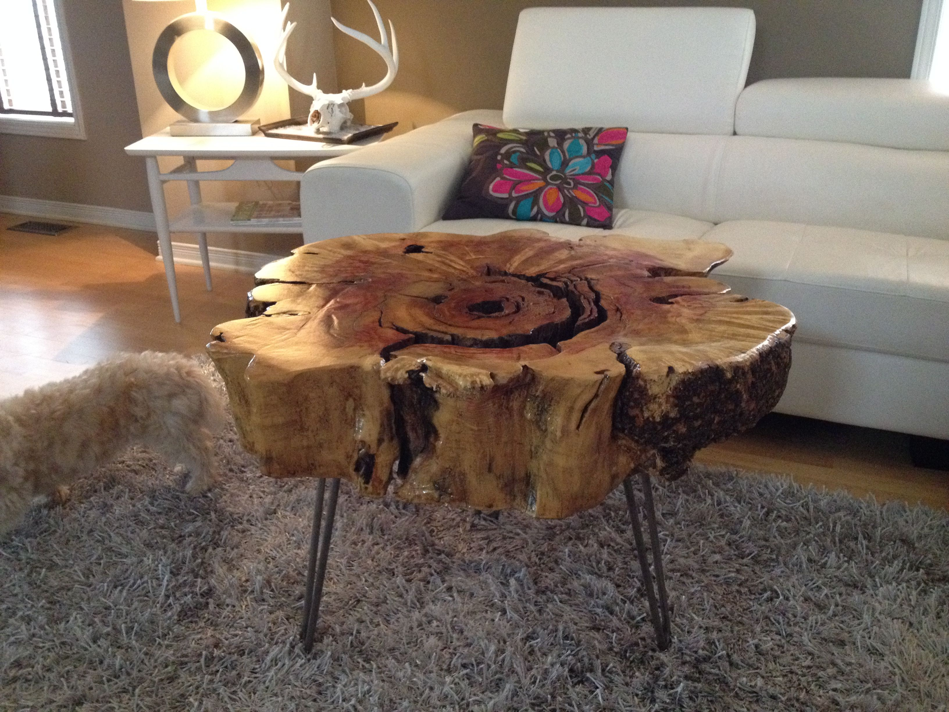 Stump Table With Hairpin Metal Legs. Stump End Table  Maple Live Edge Wood  Coffee