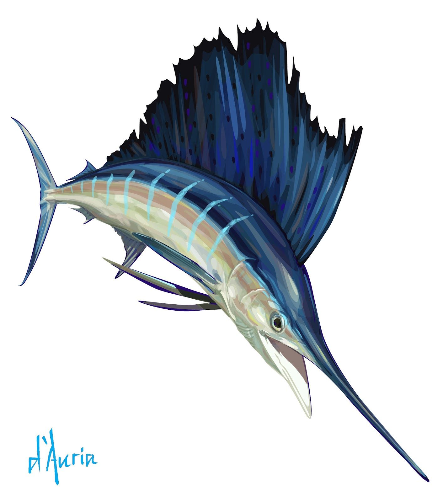 sailfish sailfish fish fish art fish drawings