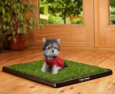 indoor grass for dogs to go potty   Pup-Head® Mini. The Original ...