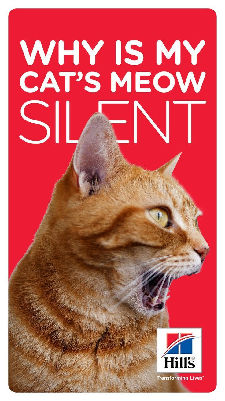 Cat Meow Types Meowing Without Sound? Cat behavior