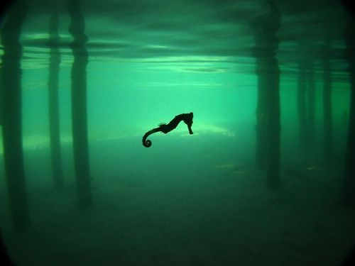 seahorses are cool