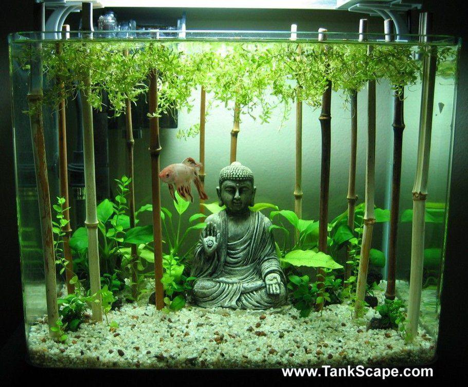 My Buddha Betta Tank Aquarium Einrichten Aquarium Deko Kleines Aquarium