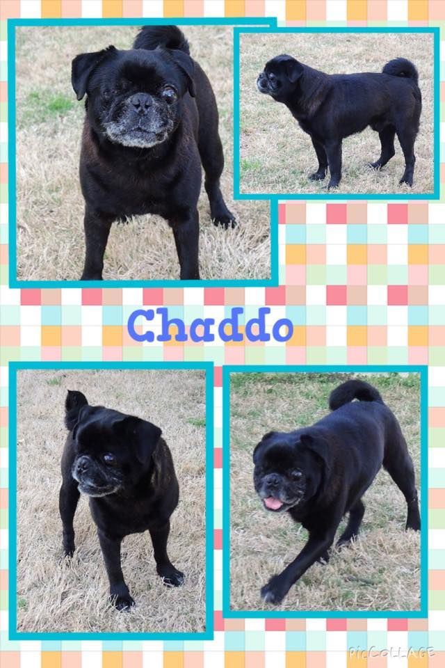 Chaddo I M An 11 Year Old Boy In My Retirement Years And Looking