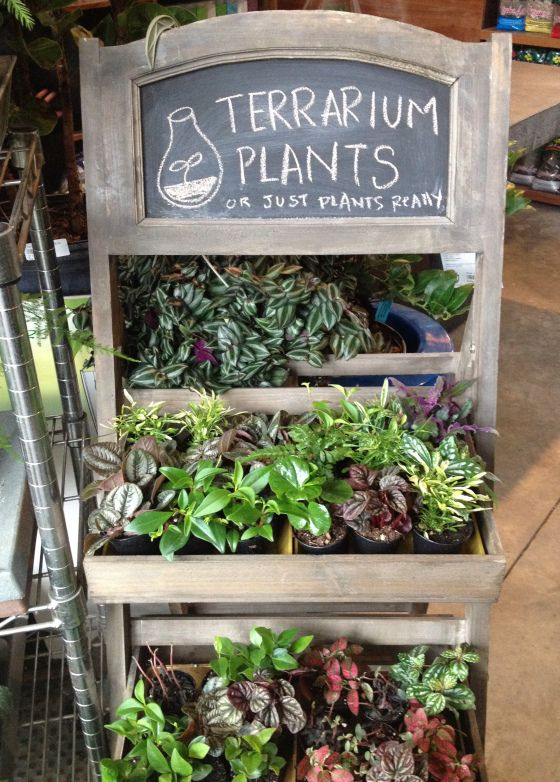 Williamsburg | Display, Shopping and Plants