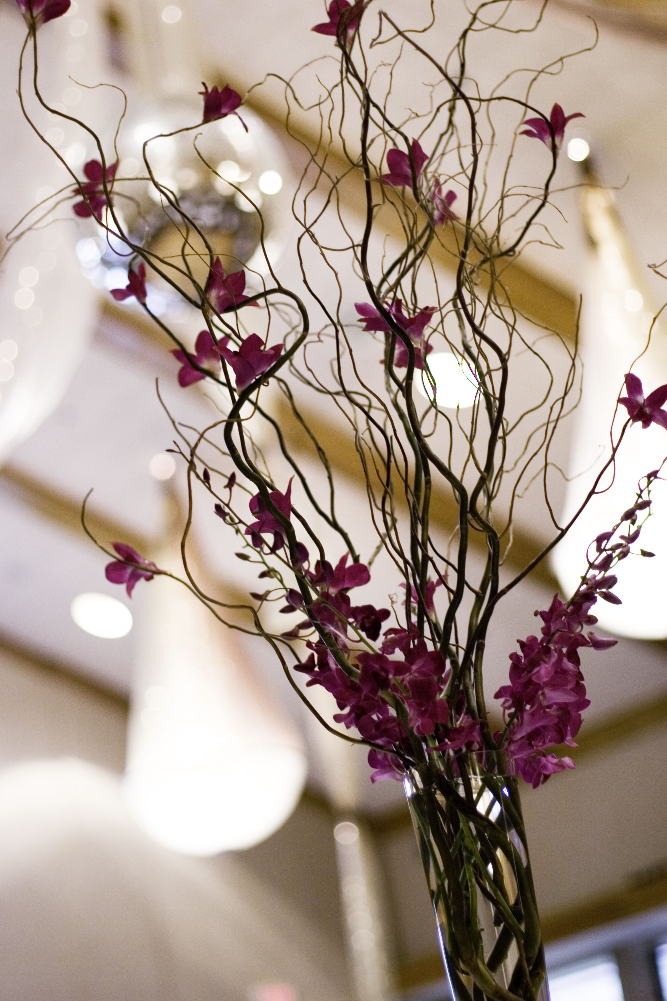 Fuchsia orchids and willow branches our story wedding ideas glass cylinder with curly willow a rustic touch for todd with orchids a few sprays at the top of the vase and a few blossoms attached to the branches reviewsmspy