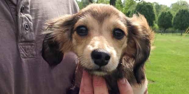 Trained Rescue Dogs Rescue Dogs Rescue Dogs For Sale Dogs