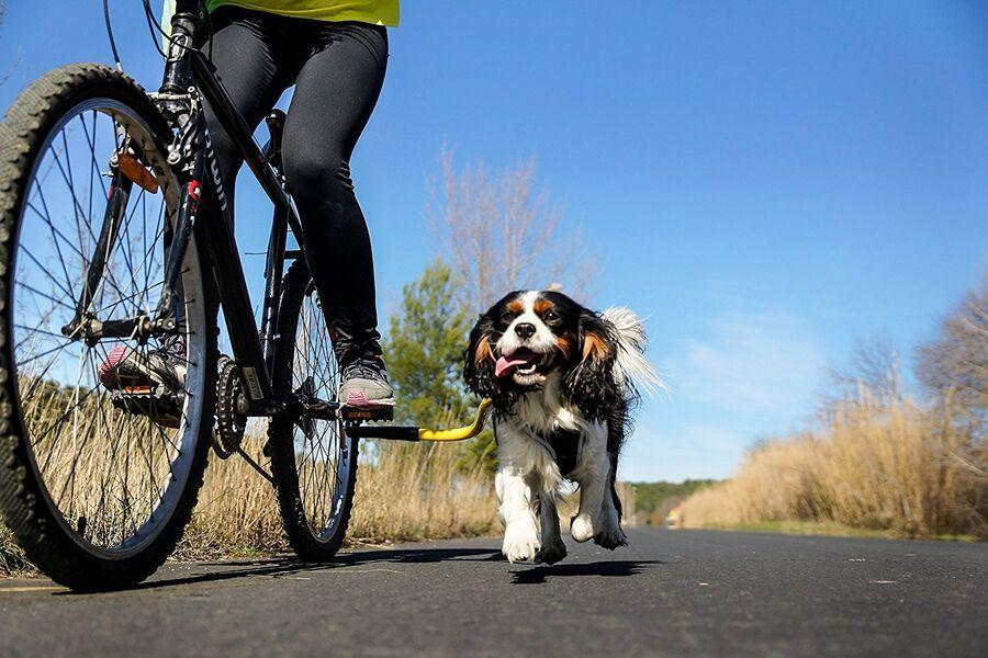 Bike Tow Leash Dog Bicycle Attachment Leash Ad Sponsored