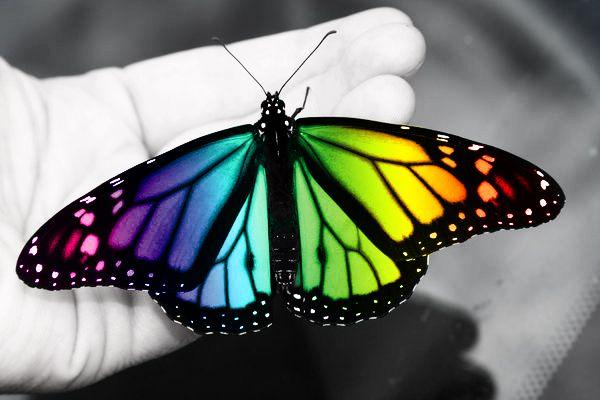 28 Beautiful Butterfly Inspirations Rainbow Butterflies