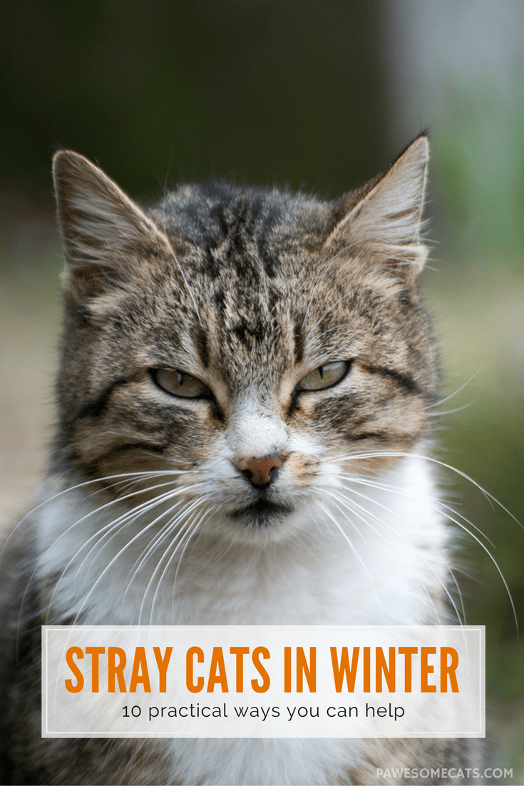 10 Ways to Help Stray Cats this Winter Outdoor cat