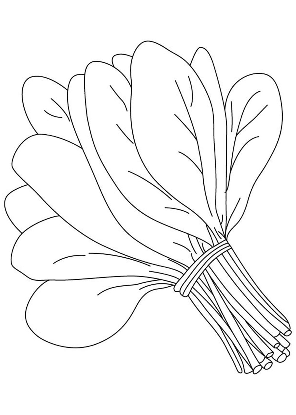 spinach vegetable vegetable coloring pages pinterest
