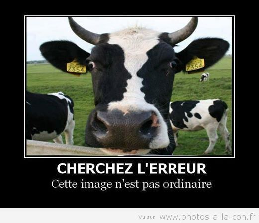 Image drole vache rire c 39 est la sante - Image de vache drole ...